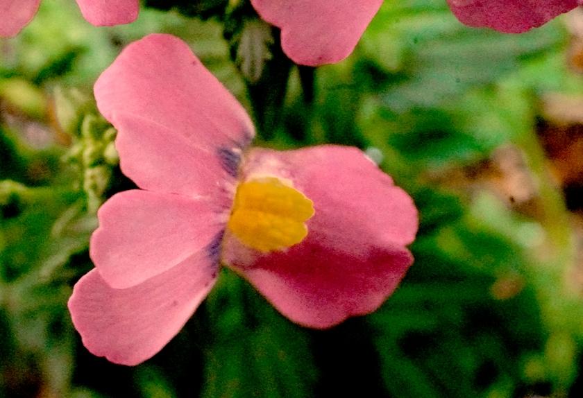 pinkfloral-800-DSC00653