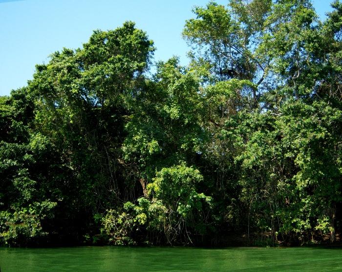 TropicalForestsBelize100_1336