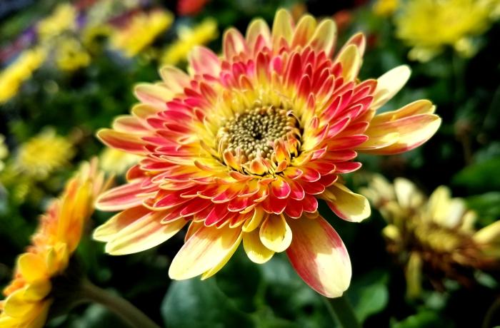 yellowpink-flower06242017.jpg