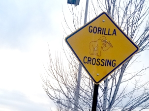 GorillaCrossing-20170126_163901-featured