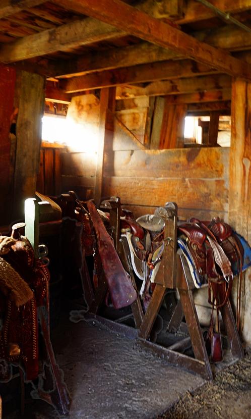 saddles_a