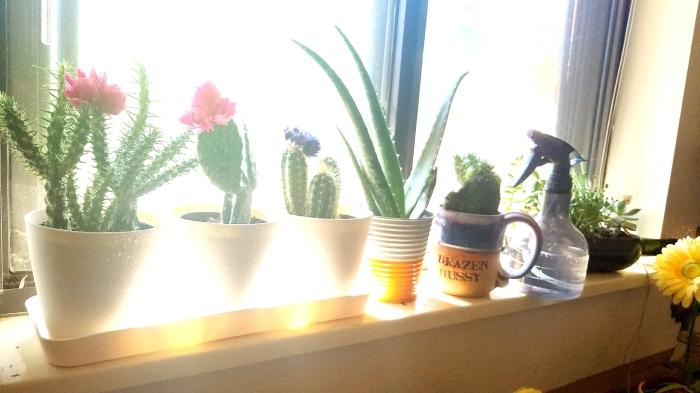 windowsill-garden4_o