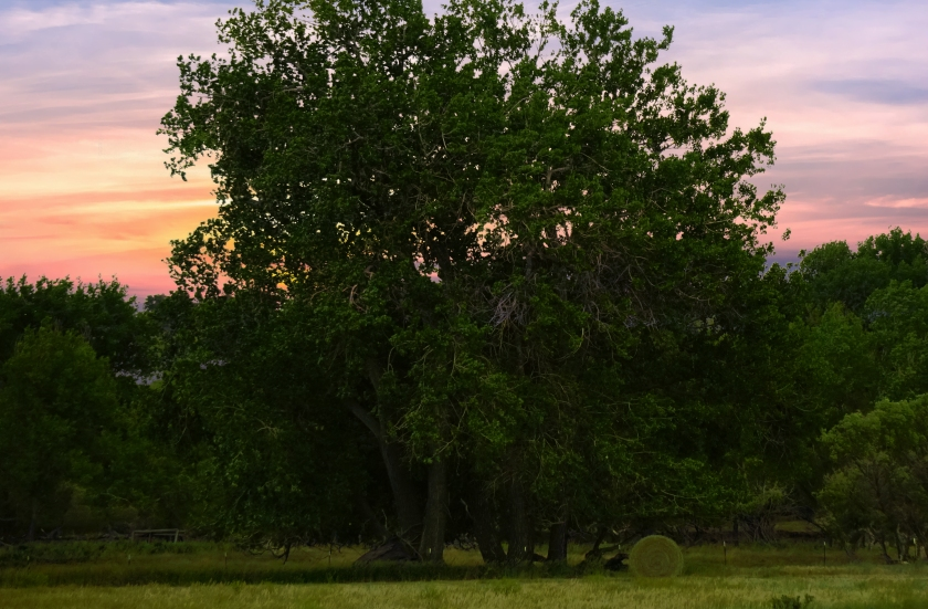 woods-DSC02489