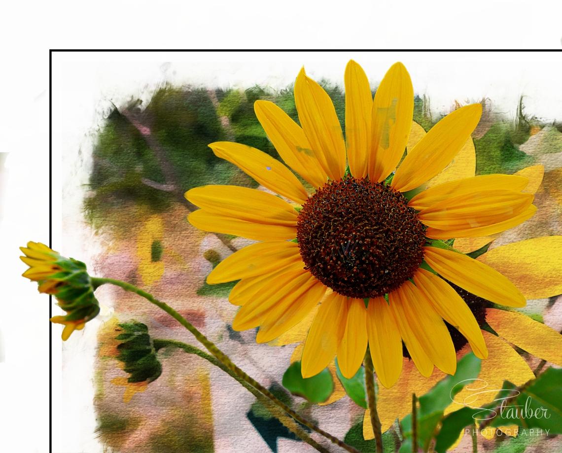 2016-09-20_sunflower1_print