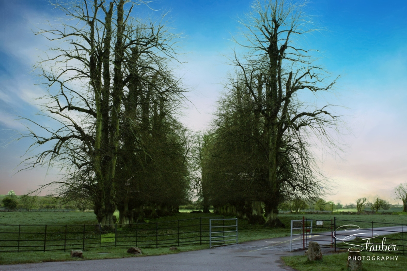 EnglishTreescape-IMG_2810