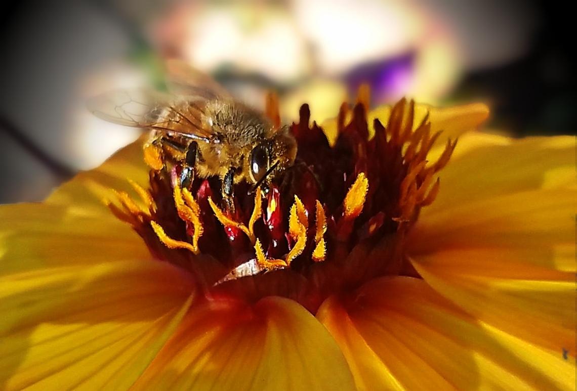 02-Bee-020170828_A