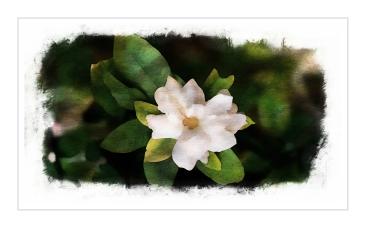 03-gardenia-venice_20150617_022_A