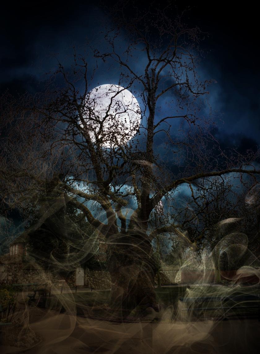 spooky-CanteburyIMG_3011_A