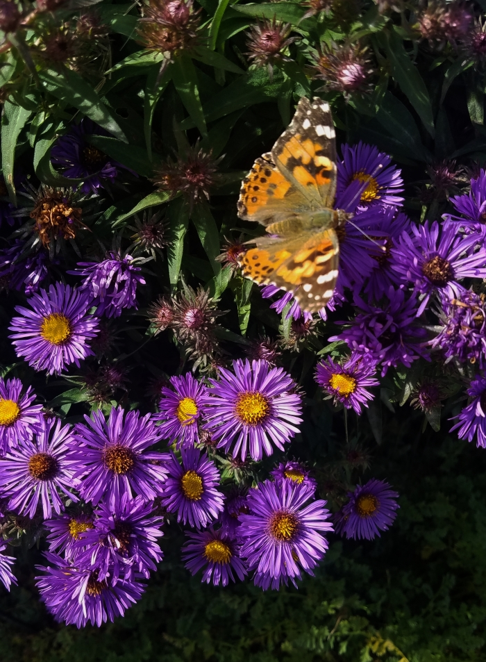 00-asters-20170930_115912_A