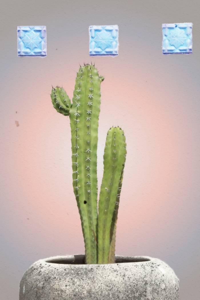 00-cactus-DSC03103_A.jpg