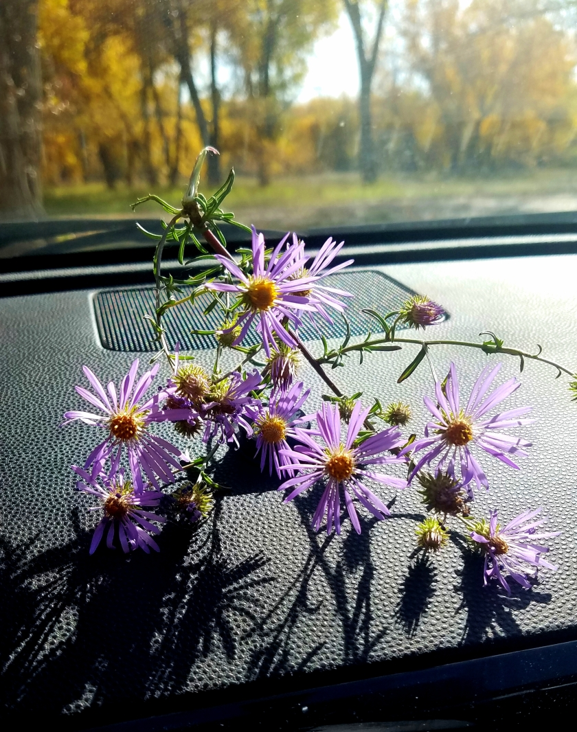 00-gift-asters-10142017_A