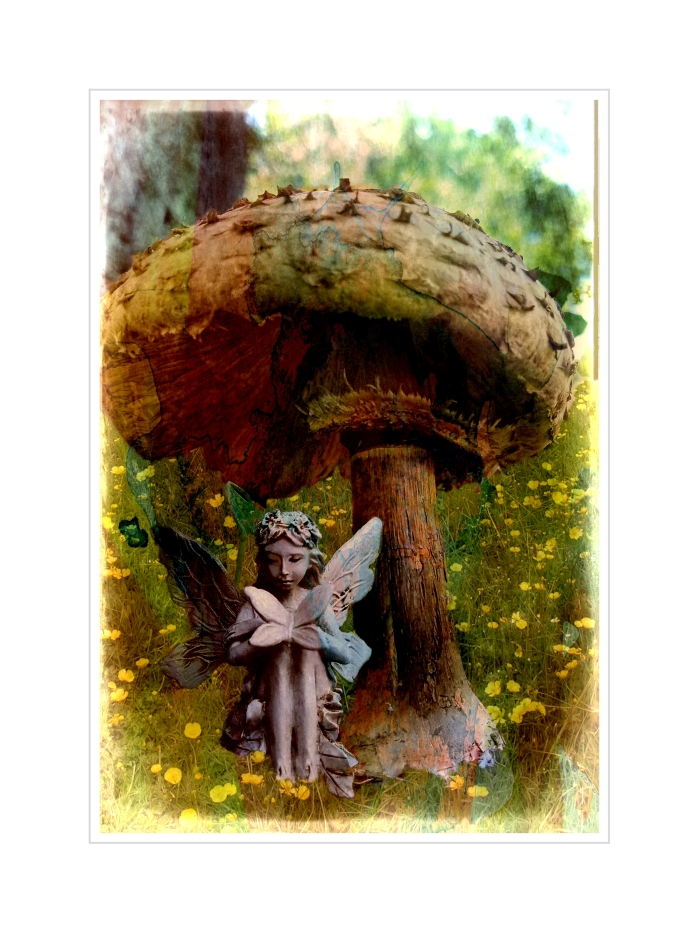 02-fairy-toadstool-woody2017_A