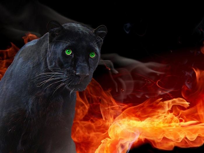 Cat-Panther-010