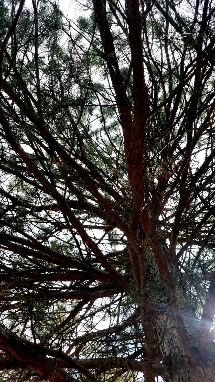 tree-20171001_141558_36729540934_o