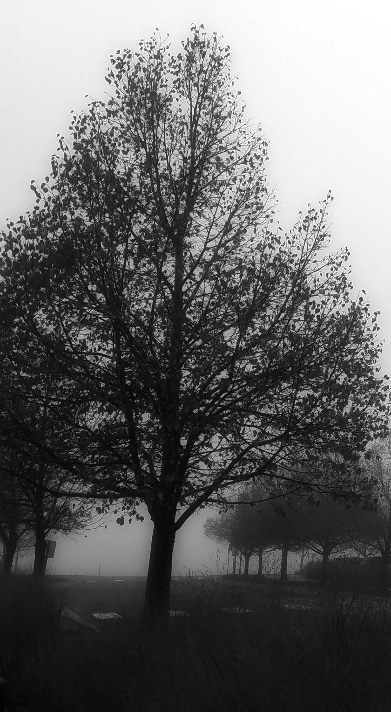 00-foggymorning--20171106_073825A