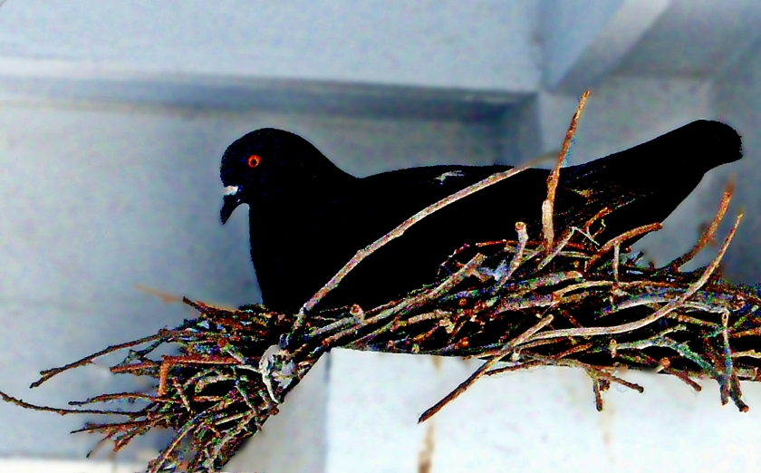 00-nesting-100_0861b_A
