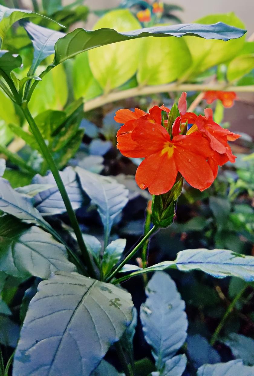 00-orange-floral-20171104_103144_38176876961A