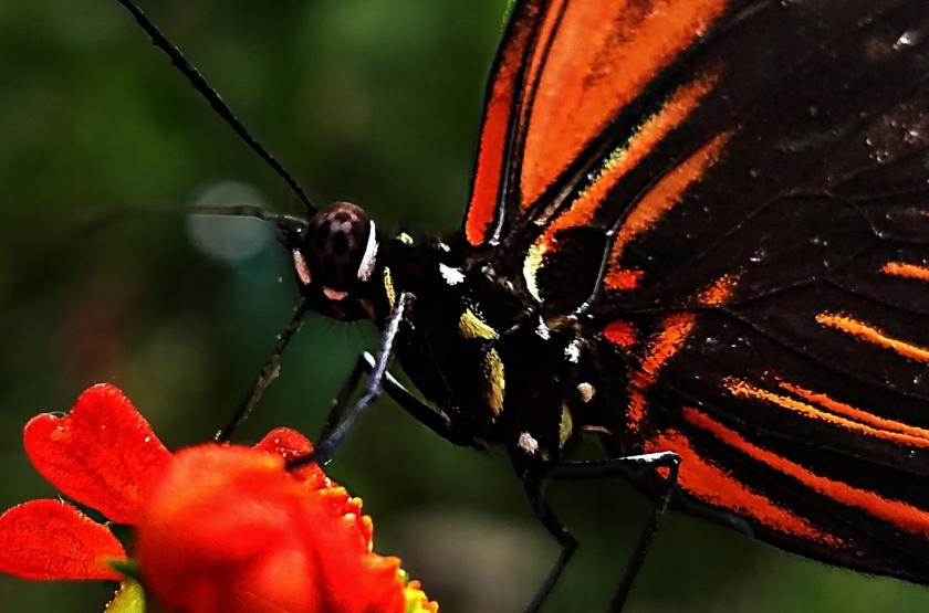 00-butterfly-20170916_114723macro