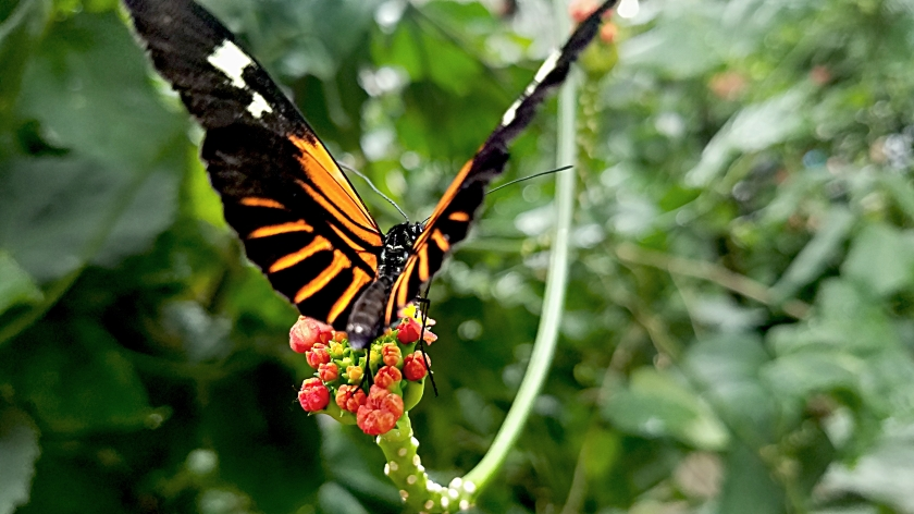 00-butterfly-20170916_114805_37074062116A
