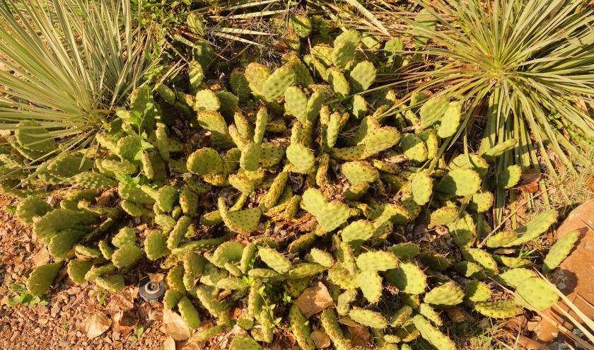 00-cacti-DSC02734_pe.jpg