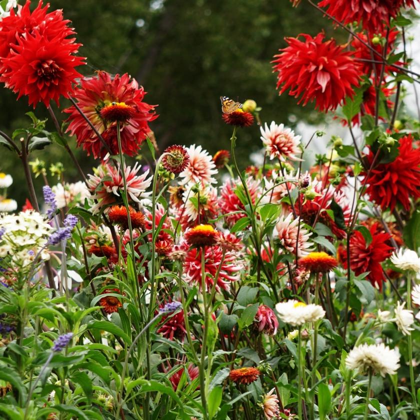 00-Floral-Garden-sq-DSC03157A