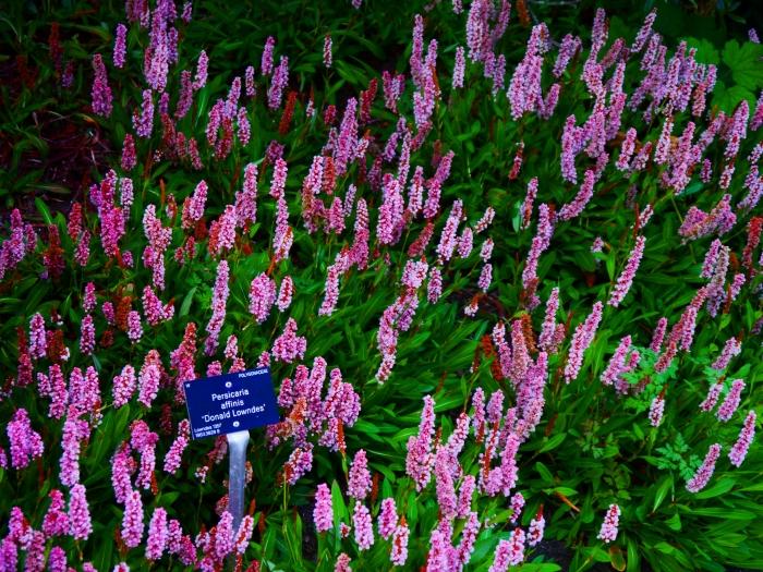 00-lavendertexture-floral-P1000138A.jpg