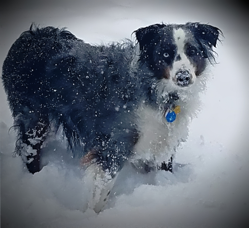 00-Oberon-snowdog-20170429_080300_A