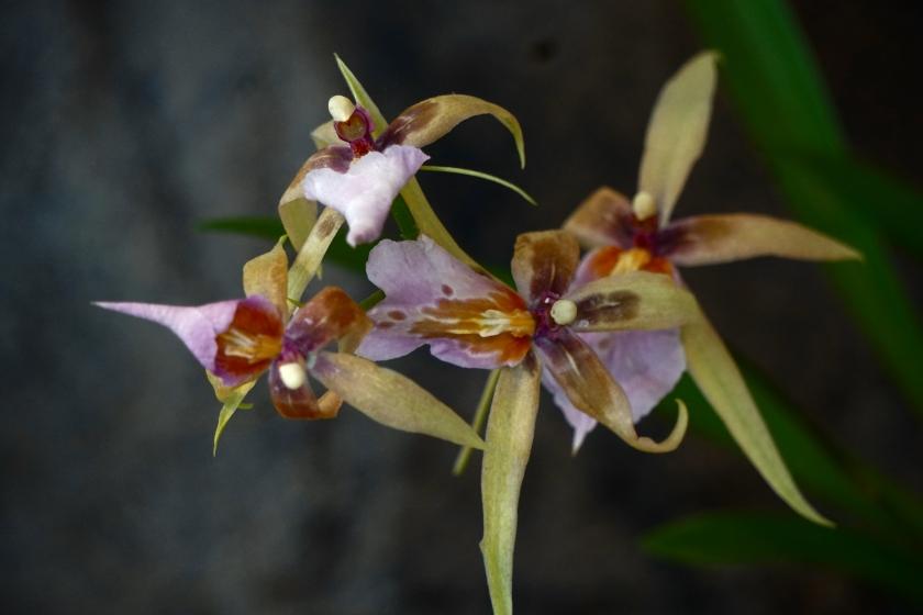 00-orchid-bokeh-DSC03645A