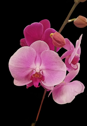 00-orchid-purple-blk-20171209_A