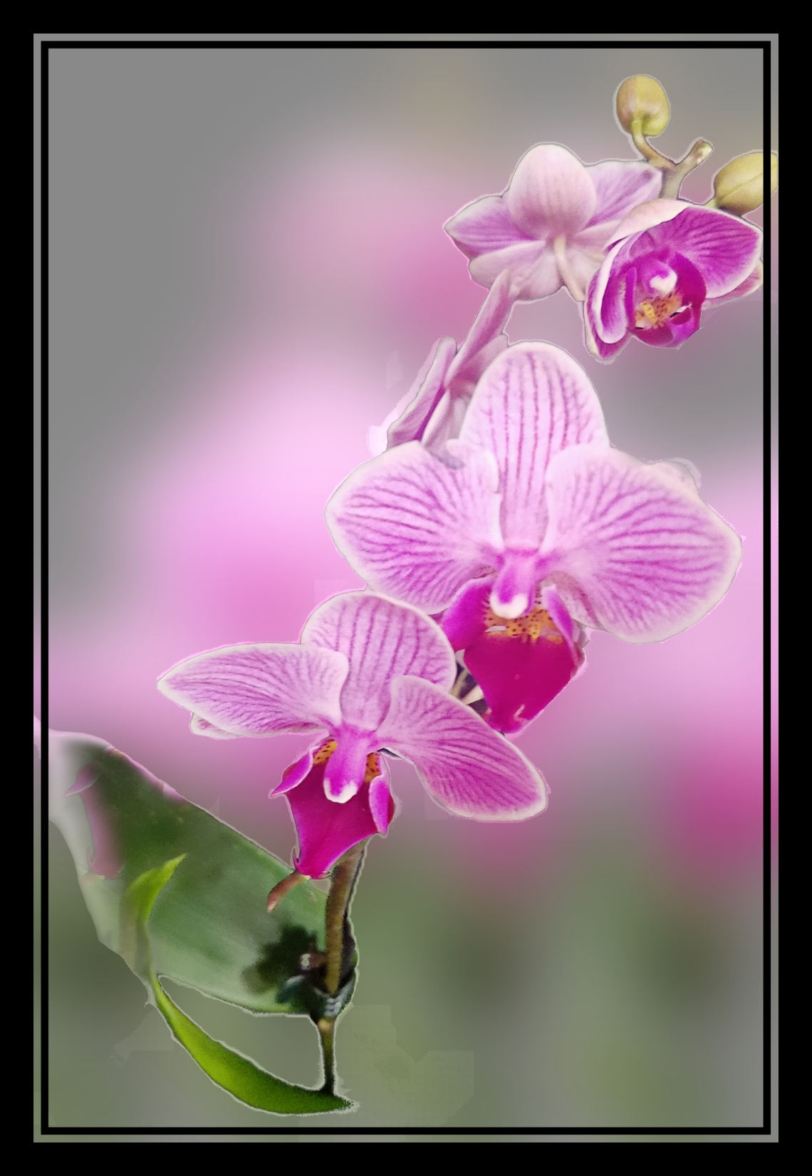 00-orchid-purple-glass-20171209_172116_3border