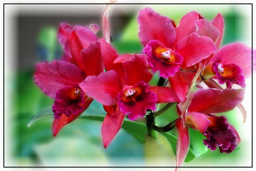 00-orchids-DSC03625_A