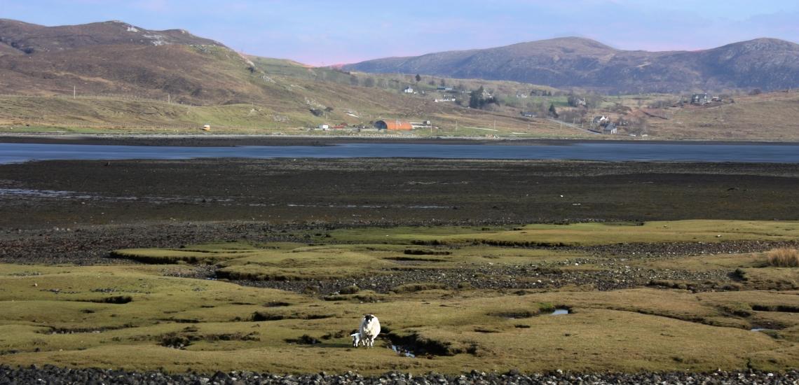 00-pastural-sheep-20090403_106A