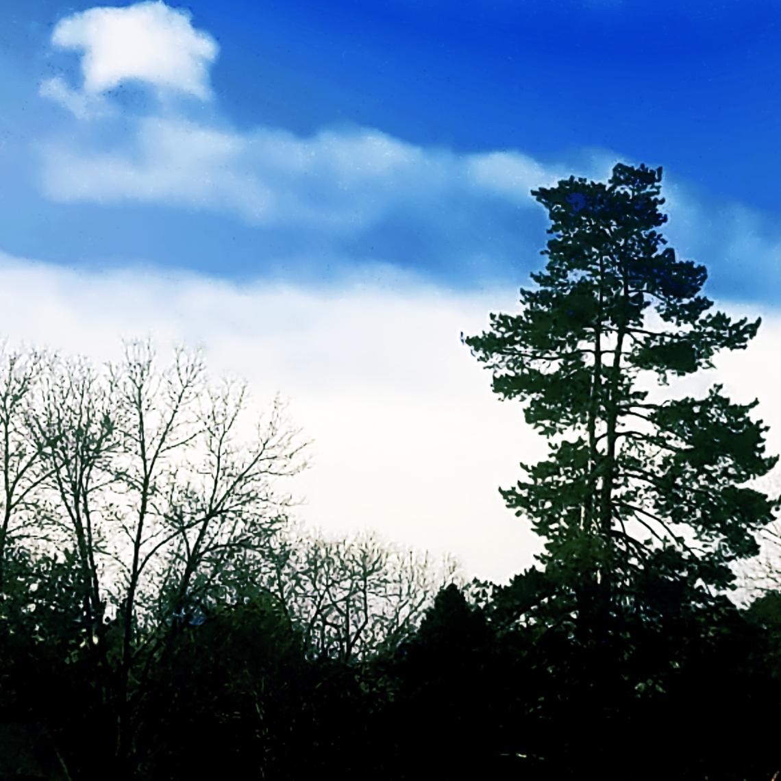 00-trees-20171223