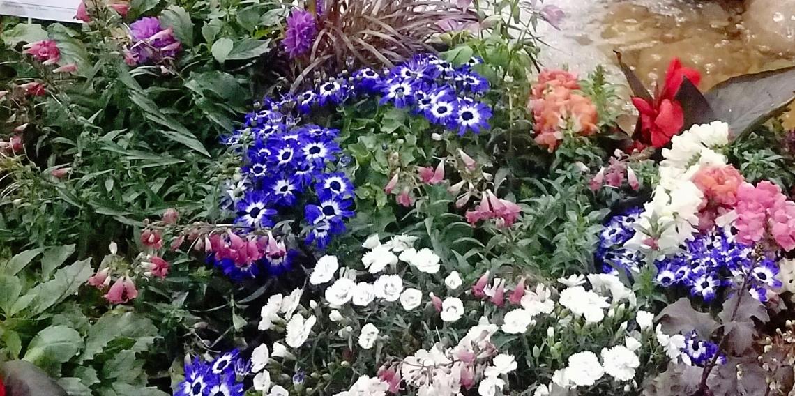 000-springgarden-20170207_075818A.jpg