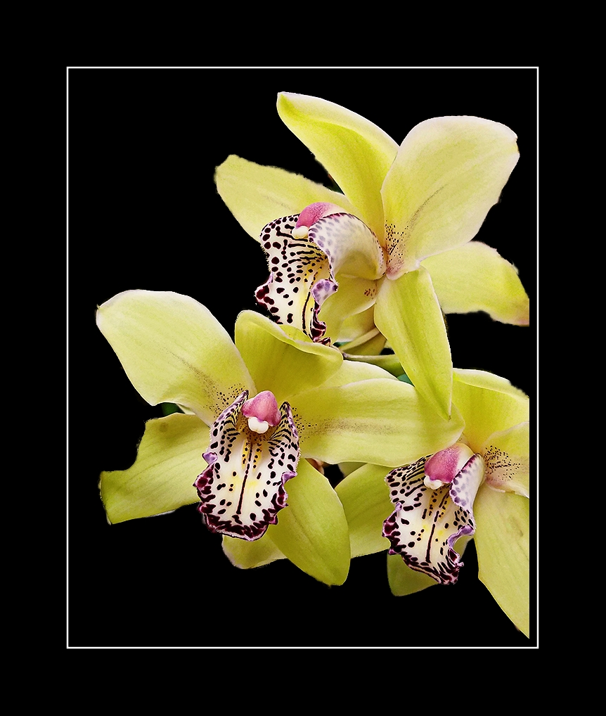 Orchid4a-20170109_164151B