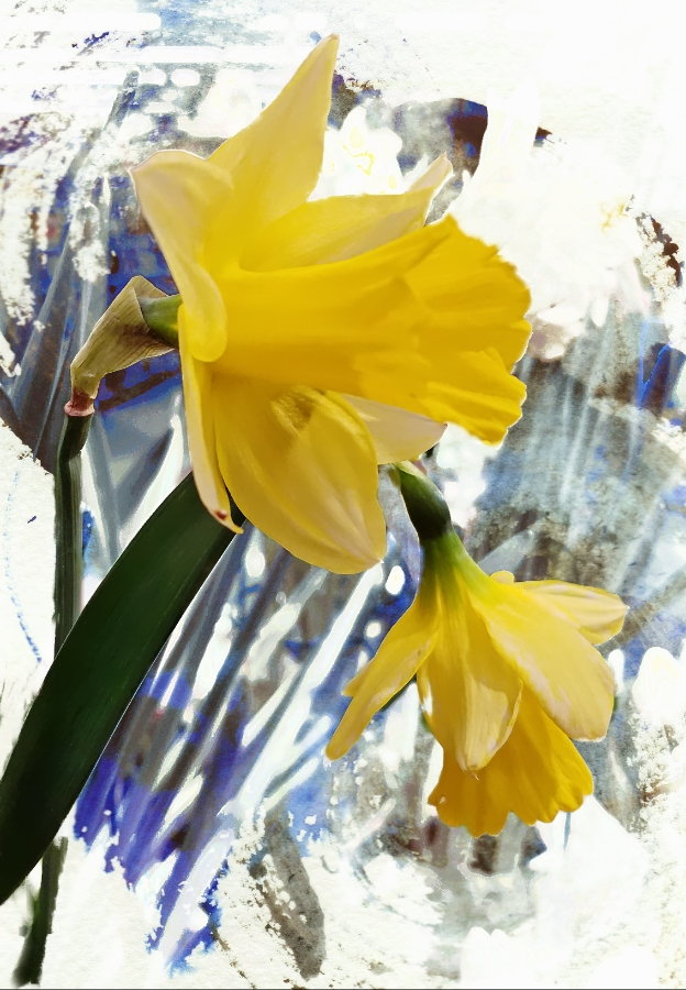 00-daffodil-20180123_164555_A900