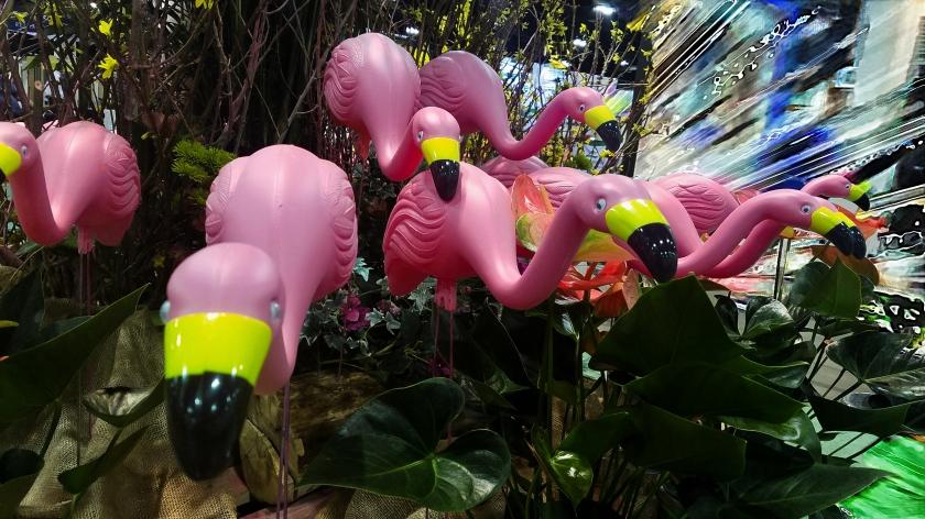 00-flamigo-pink-20170205_141928_pe