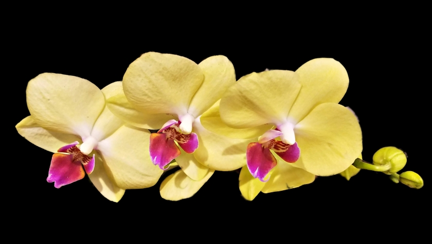 00-Orchid-10-20180104_162548_10A