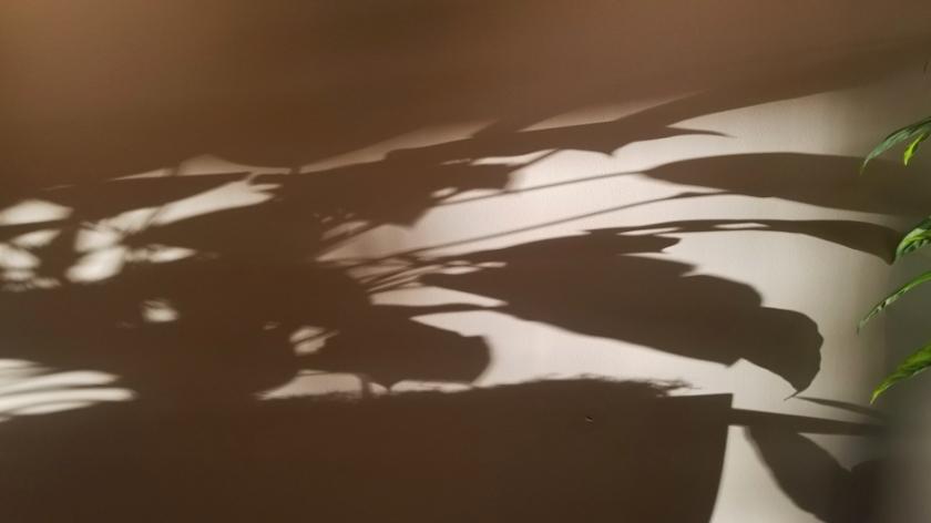 00-shadow-20180123_163513-900
