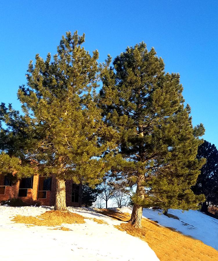 00-trees-20180123_163644_900