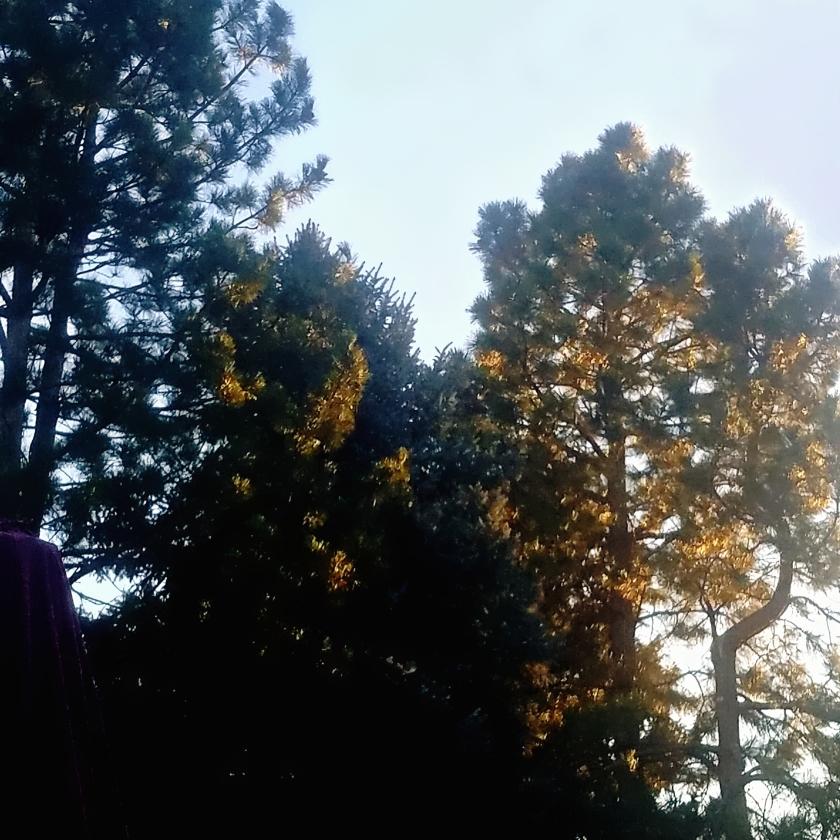 LIghtontheTrees-20180102_161441_A
