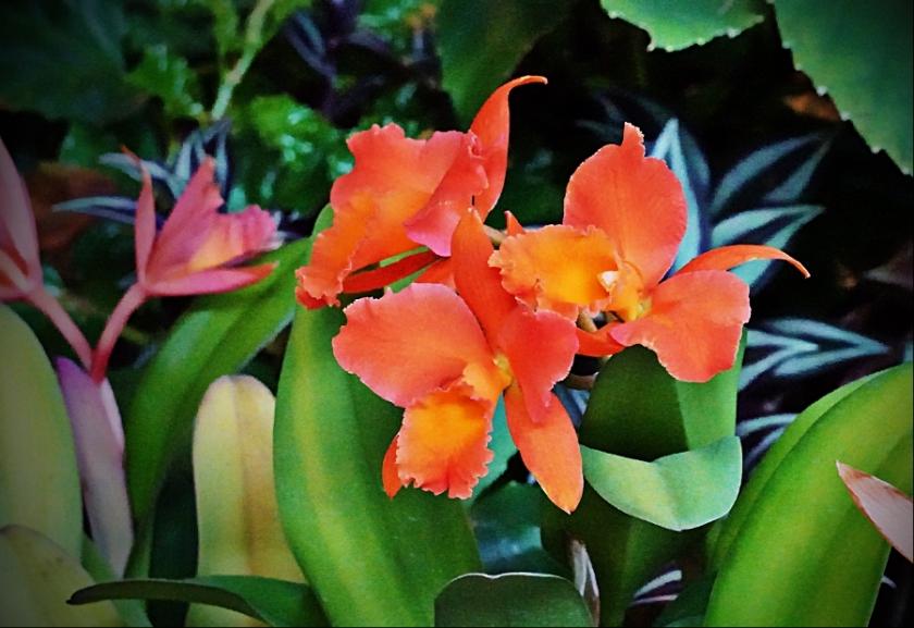 orchid-DSC04342_portraitA900