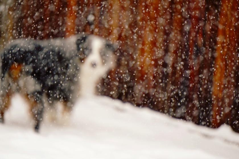 Snowday-DSC04125_900