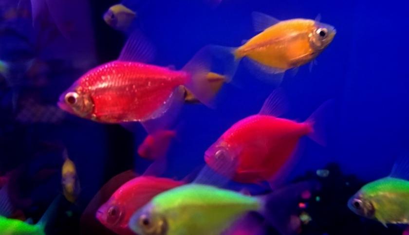 00-colorfulfish-20180205_164828A900
