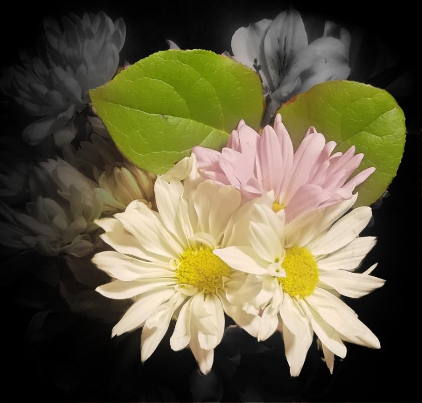 00-daisys-20180130_193300_A900