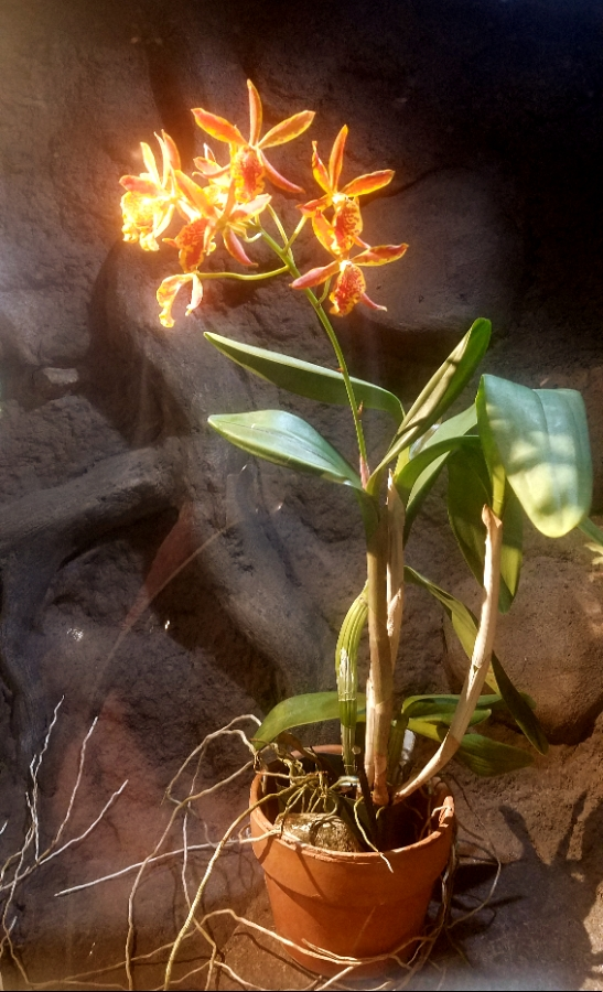 00-orange-orchid-20180130_133849_A900