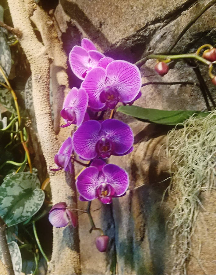 00-orchid-DBG-20180130_133920_28212682439_A900