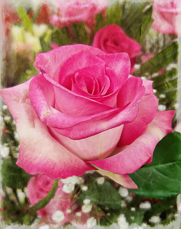 00-pinkroses-20180212_162955_40234223151_A900