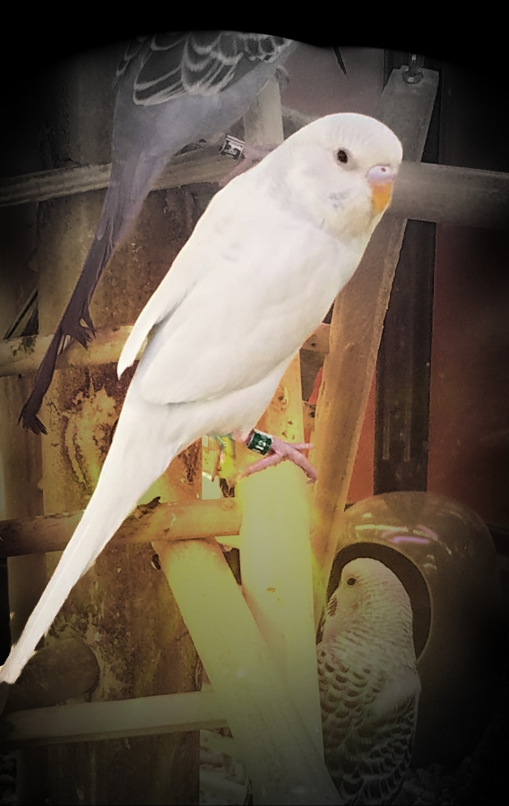00-whiteparakeet-20180205_164535_A900