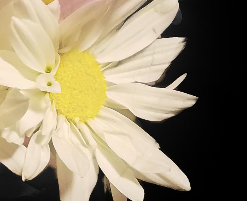 001-daisys-20180130_193300_B
